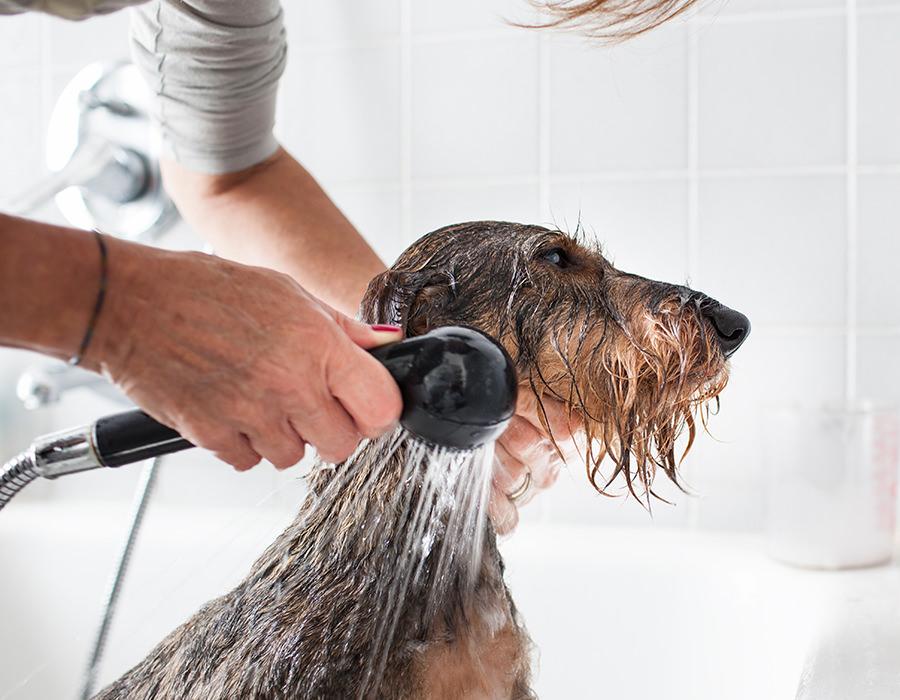 ペットをシャワーで洗う画像